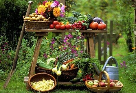 Ingrijire si cultivare legume