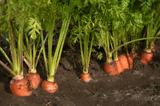 10 legume si fructe usor de plantat pentru gradinarii amatori