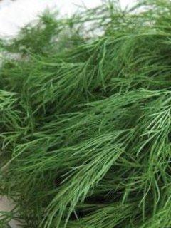 marar pentru plantat in gradina