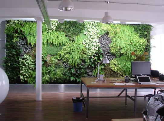 Amenajarea unei gradini verticare intr-un birou
