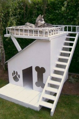 Cusca de caini cu terasa cu scari