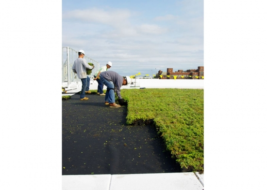 Montare rulouri gazon sau muschi pe terasa blocului