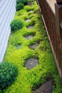 Alee cu iarba si piatra