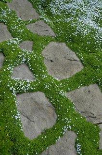 Iarba cu floricele colorate printre bucati de piatra naturala