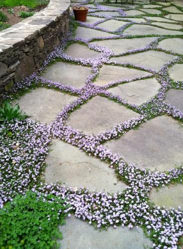 Idee de alee de gradina cu flori