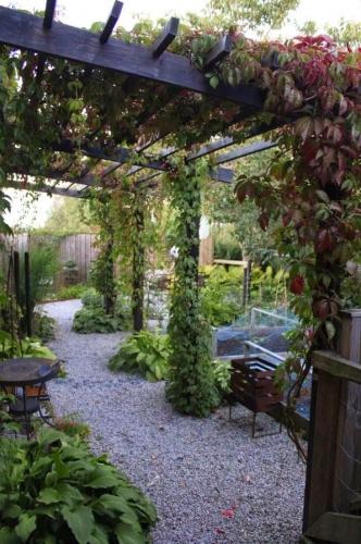 plante pergola 28 images plante grimpante ombre pour. Black Bedroom Furniture Sets. Home Design Ideas