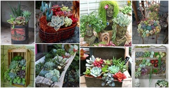Amenajari frumoase cu plante suculente