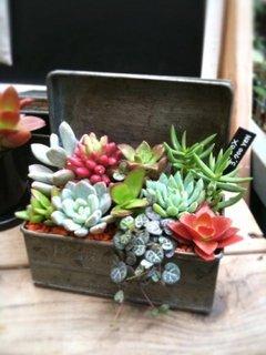 Cutie cu plante suculente