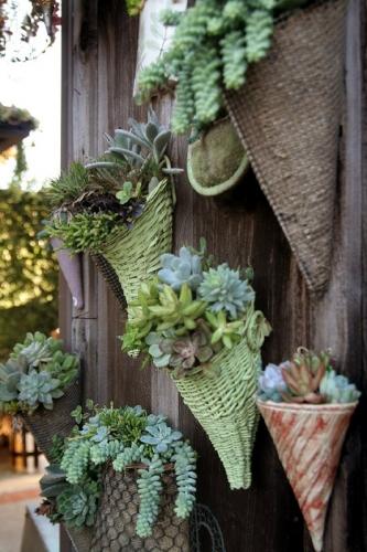 Decoratiune gard plante suculente