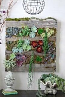 Decoratiune plante grase