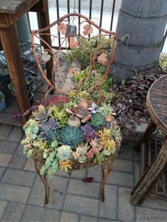 Design scaun plante suculente