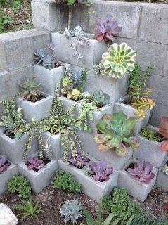 Gradina etajata plante suculente
