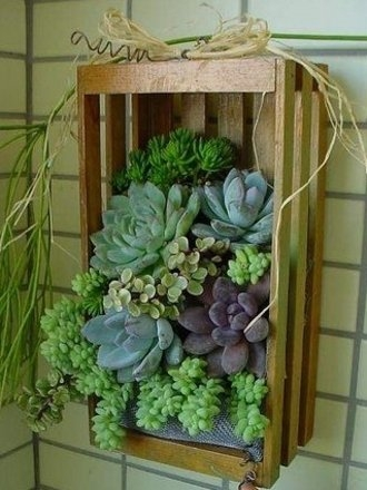 Idee design plante suculente