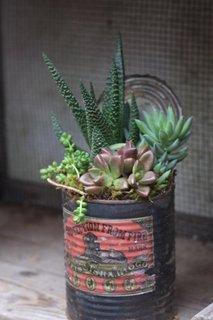 Plante suculente verzi
