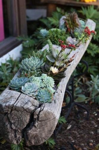 Suport lemn plante suculente