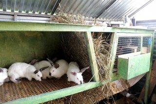 Amenajare custi pentru iepuri