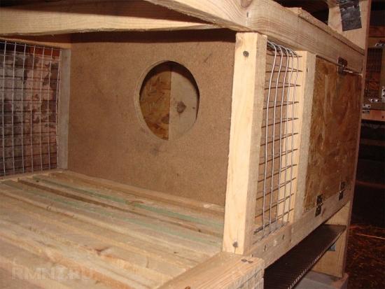 Construire cusca iepuri