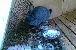 Cusca iepuri cu hranitoare