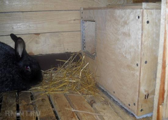 Cusca iepuri cu spatiu de odihna