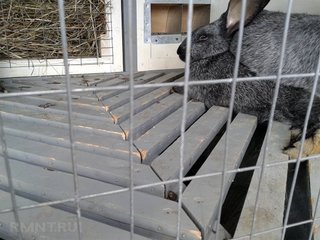 Podea cusca iepuri