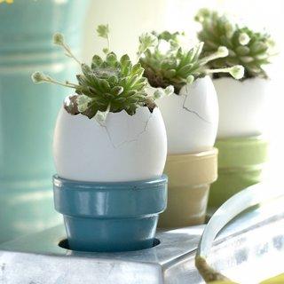 Aranjamente cu coji de oua si flori