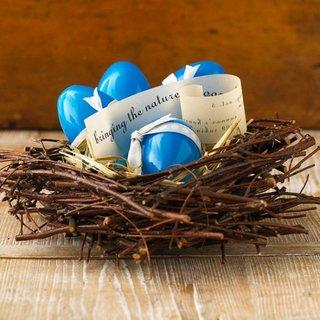 Cuib din surcele de lemn cu oua albastre