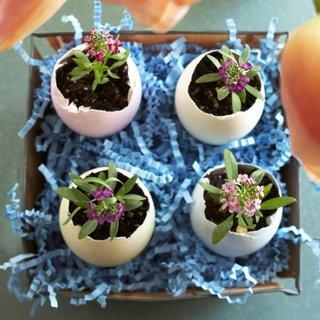 Mini ghivece din coji de oua