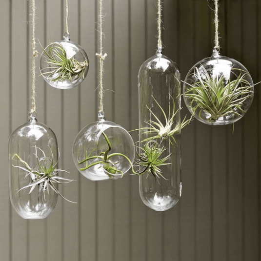 Cortina de plante aerofite in globuri de sticla