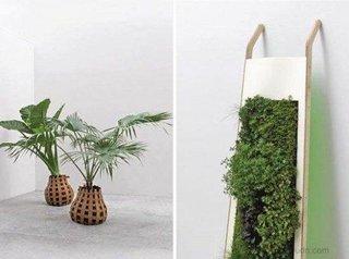Decor modern alb si plante verzi si licheni