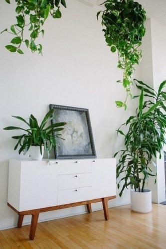 Decorare locuinta cu plante agatatoare si plante in ghivece