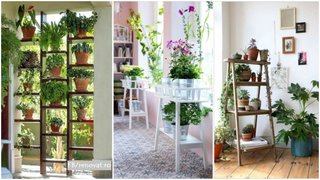 Idei aranjare plante in interior