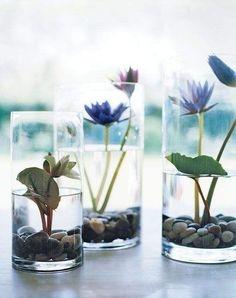 Plante acvatice asezate in vaze transparente