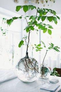 Plante acvatice pentru interiorul locuintei