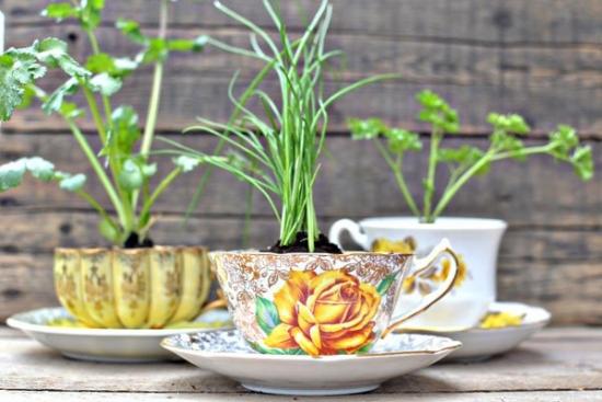 Plante aromatice plantate in cesti de ceai