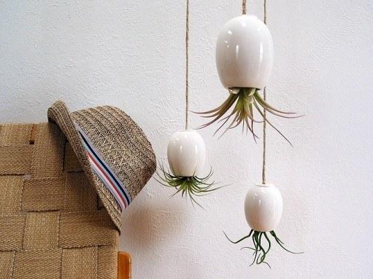 Plante in ghivece albe