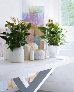 Plante pitice pentru decor birou