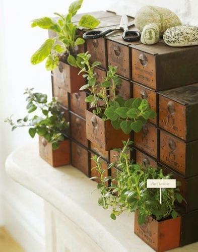 Sertarase umplute cu pamant si plante