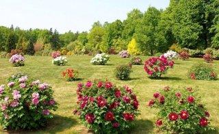Arbusti ornamentali cu flori pentru gradini cu soare