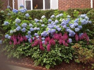 Gradina in fata casei cu soiuri de arbusti ornamentali cu flori colorate
