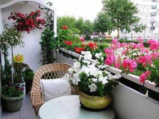 Gradina cu petunii in balcon