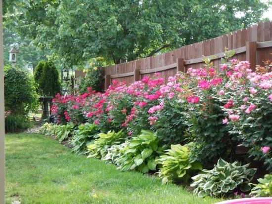 Bujorii de gradina - asa trebuie plantati si ingrijiti pentru a avea o curte plina de flori intreaga vara