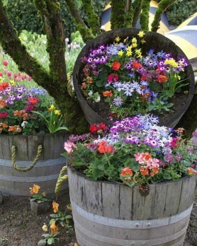 Butoaie vechi folosite ca jardiniere