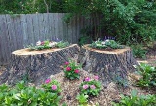 Amenajarea unei gradini cu resturi din doi copaci taiati