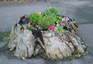Buturuga veche cu flori colorate