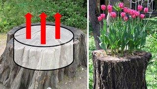 Cum transformam o buturuga veche de copac intr-o jardiniera