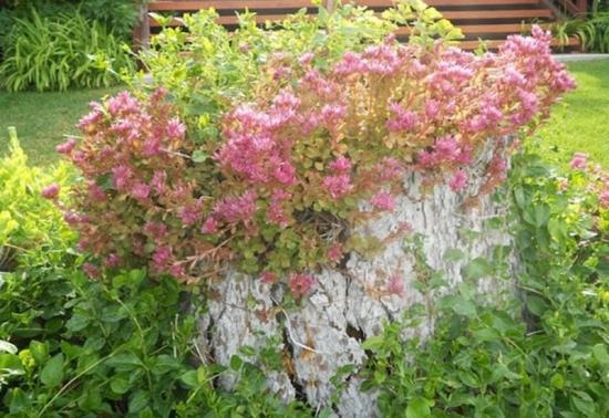 Decorarea cu flori de gradina a unei buturugi