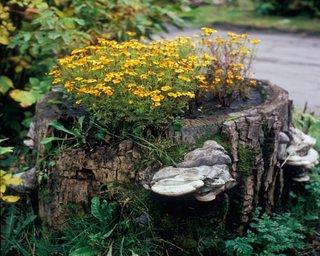 Flori galbene si ciuperci intr-o buturuga
