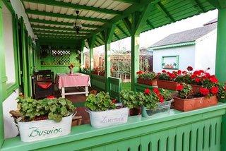 Muscate in ghiveci asezate pe veranda casei