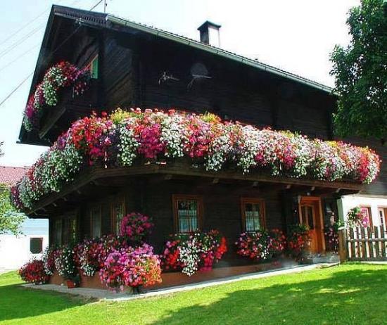 Casa decorata cu muscate