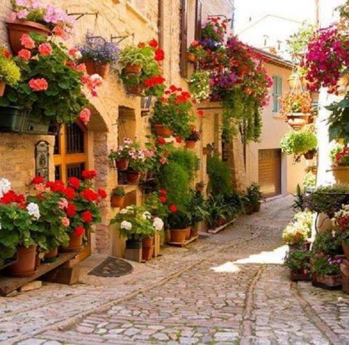 Flori suspendate pe fatada casa